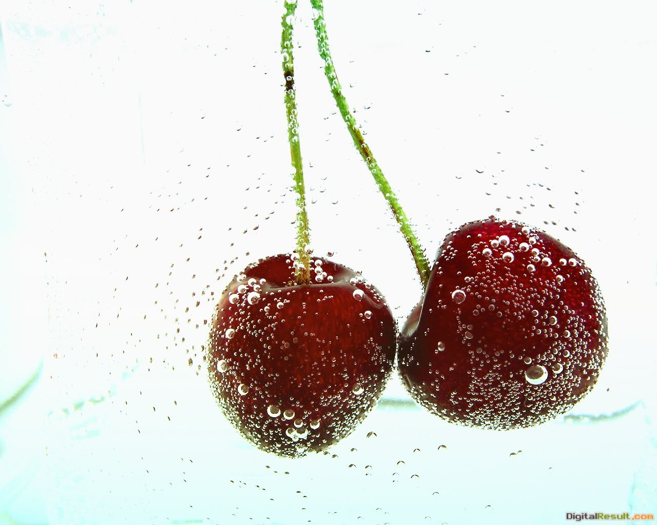 fresh cherries wallpaper 1049