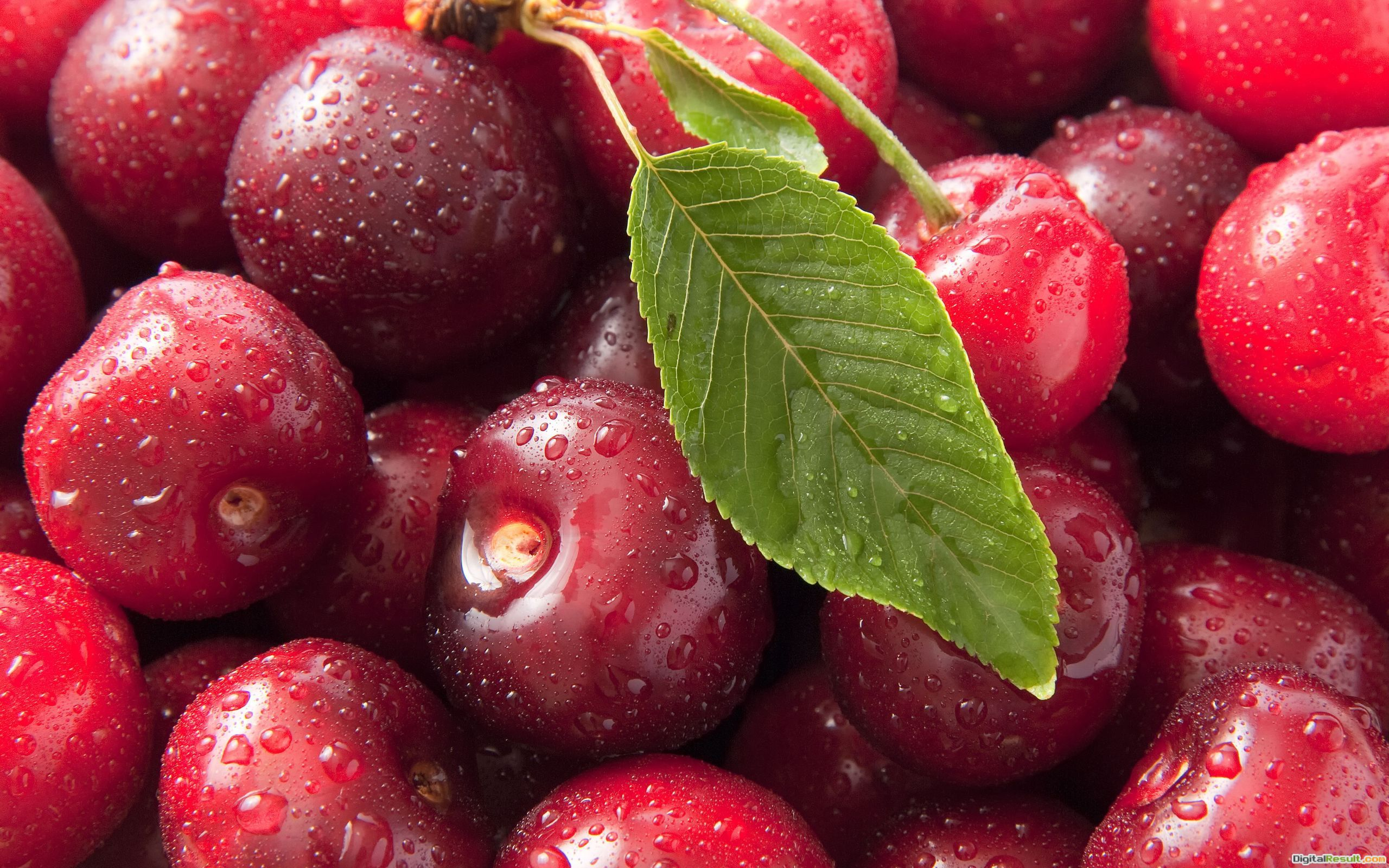 Fresh Cherry Wallpaper Computer Wallpaper | WallpaperLepi 865