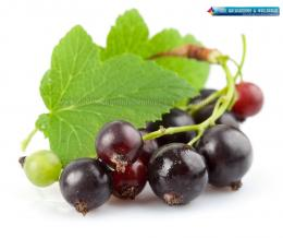 QQ Wallpapers: Fresh Fruits HD Wallpapers 1349