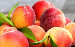 Fresh Peaches Fruit Wallpapers2560x16001118038 1154