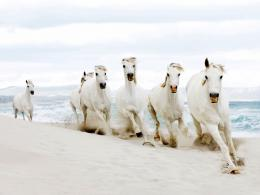 galloping through the surf is so beautiful and romanticHorse riding 881