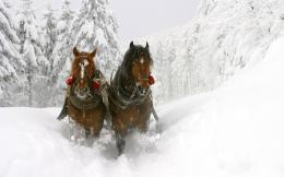 Animal Wallpapers: Horses in snow 1655