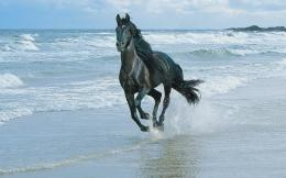Horse riding along the sea shore wallpapers and imageswallpapers 352