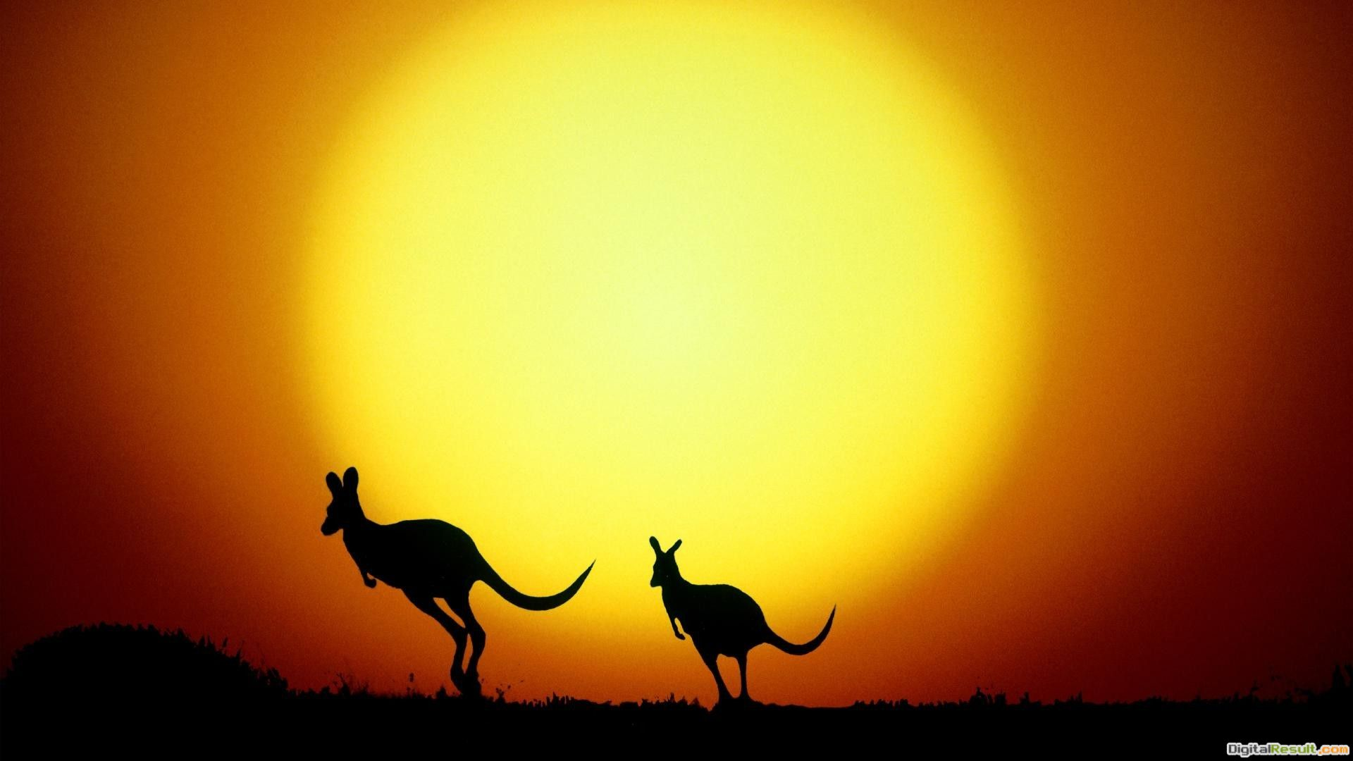 download kangaroo sunset jumping pictures hd wallpaper Car Pictures 572