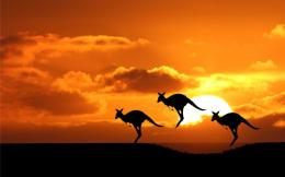 Jumping Kangaroos at Sunset | Widescreen and Full HD Wallpapers 645