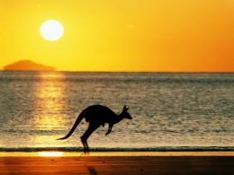 Kangaroo jumping on the beach in sunset wallpaper 1628