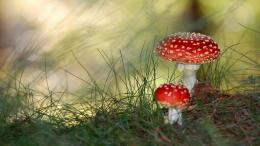 Small Mushrooms Wallpapers | HD Wallpapers 476