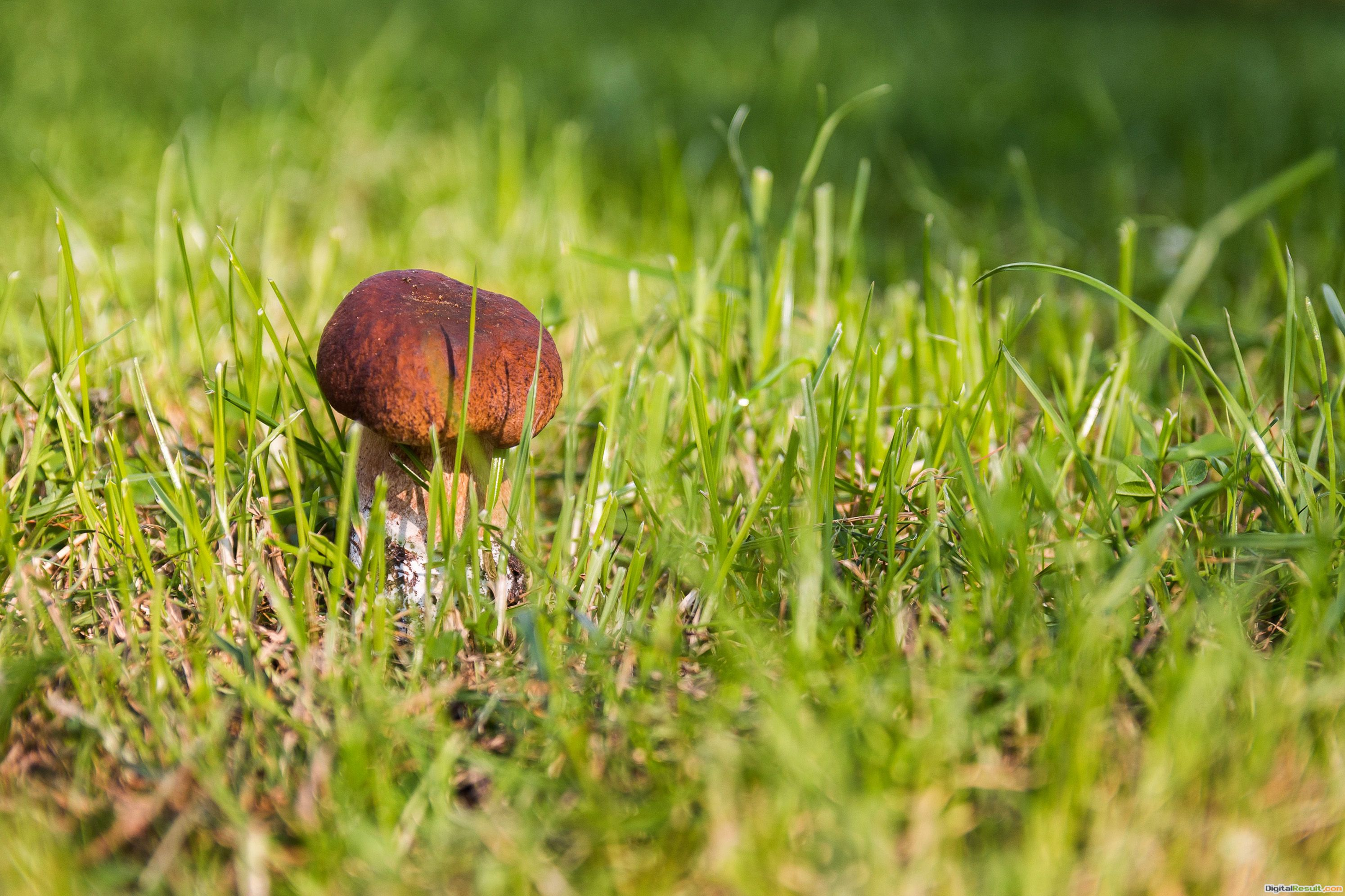 Fantastic Free Images for a Mushroom Wallpaper, Background or Texture 233