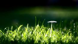 Small Mushroom And Grass Hd Widescreen Wallpapers1600x900 iWallHD 312