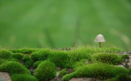 Little Fungus wallpaper 1420