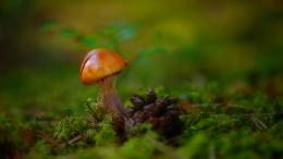 Little Mushroom | Download HD Wallpapers 949