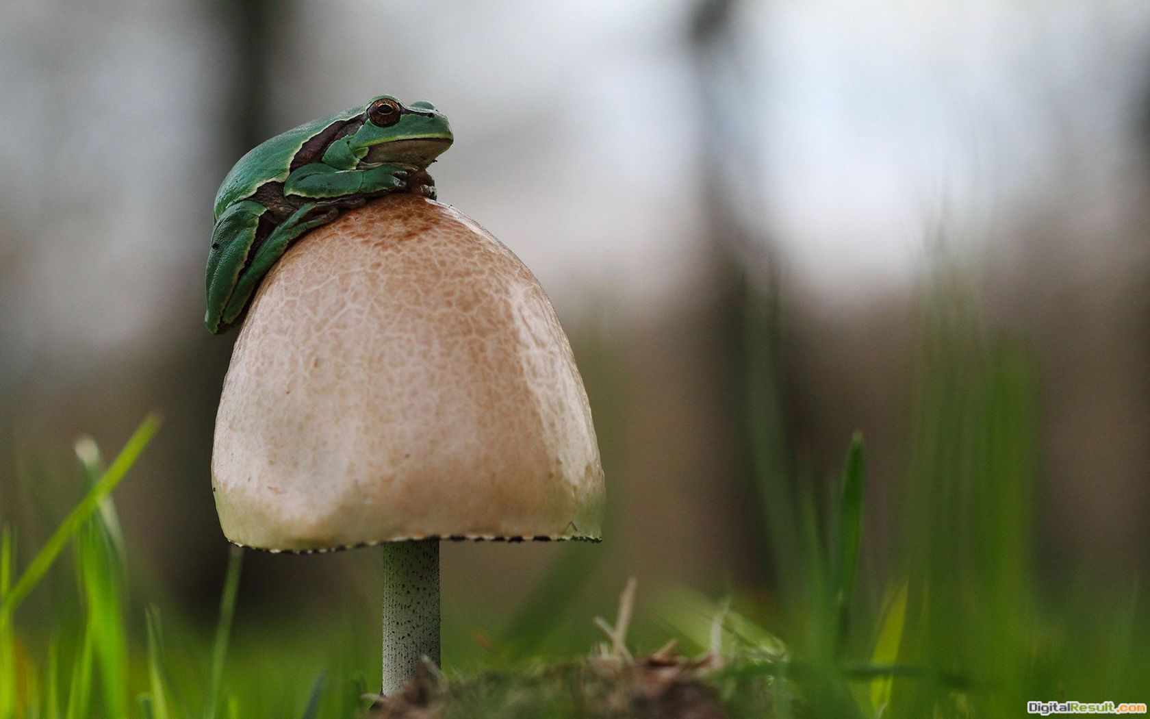 Small frog on thr mushroom Widescreen Wallpaper#19693 1930