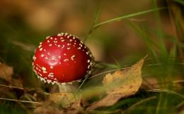 Small mushroom wallpapers and imageswallpapers, pictures, photos 1895