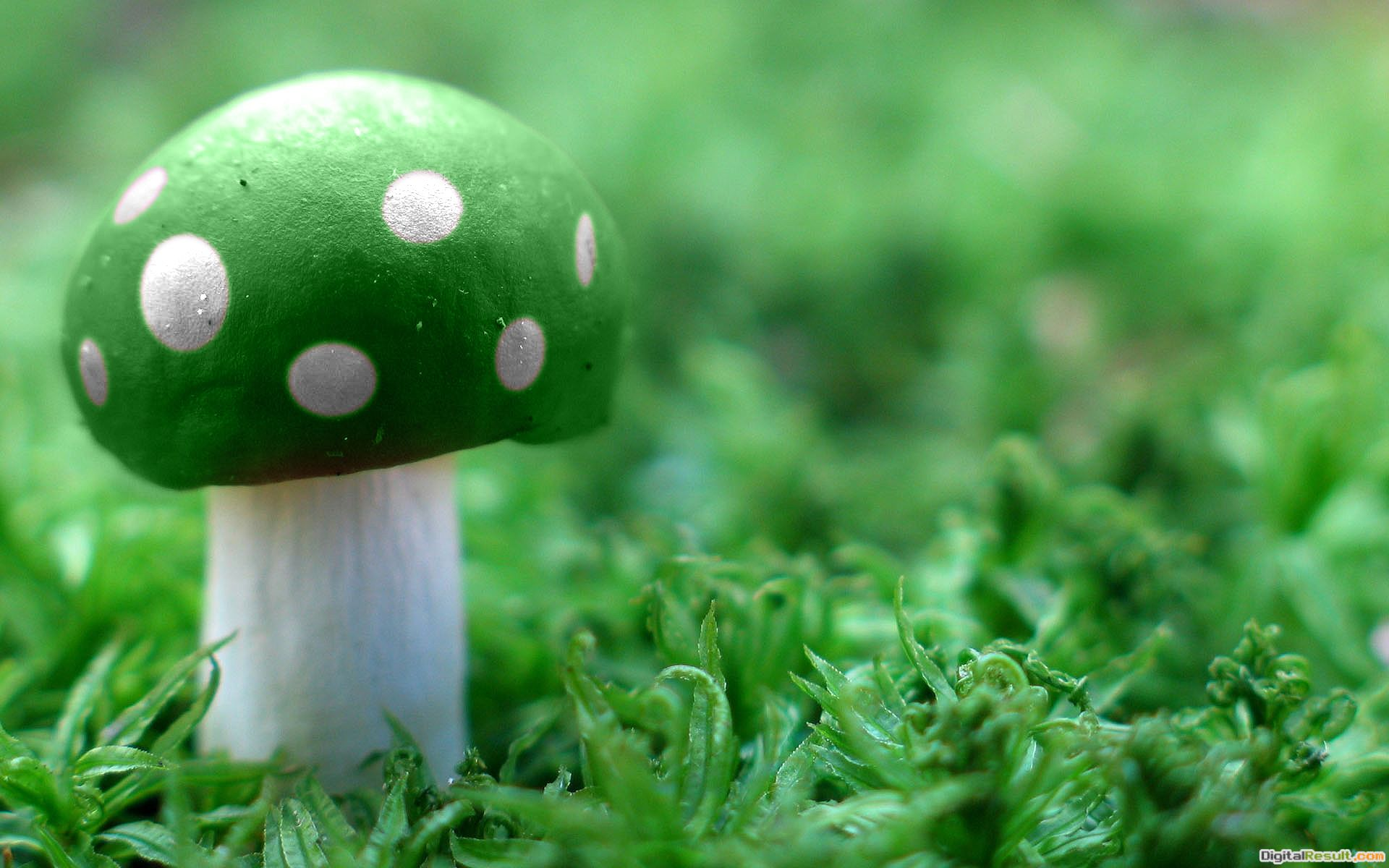 Green Mushroom Wide HD wallpaperGreen Mushroom Wide 1678