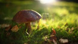 Small Mushroom Wallpaper Best Desktop Images 8 #11135 Wallpaper | Cool 1070