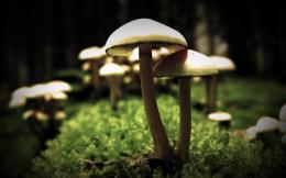 Mushrooms Wallpaper | High Quality Wallpaper 1829