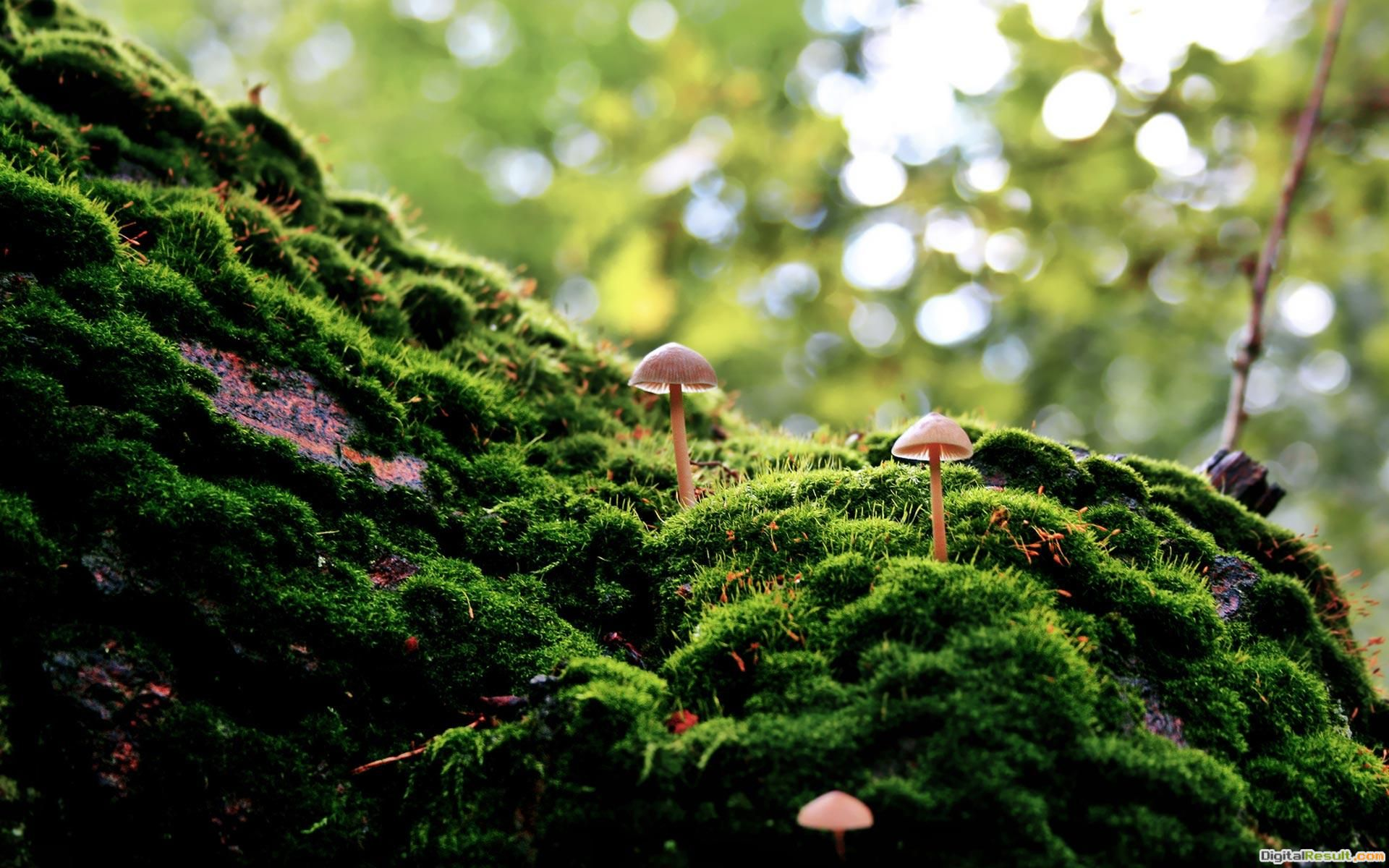 mushrooms moss forest nature 1920x1200 1796