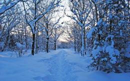 Lovely Winter Forest & Path wallpapers | Lovely Winter Forest & Path 1270