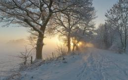 1280x800 Foggy Winter Path & Trees desktop PC and Mac wallpaper 1964