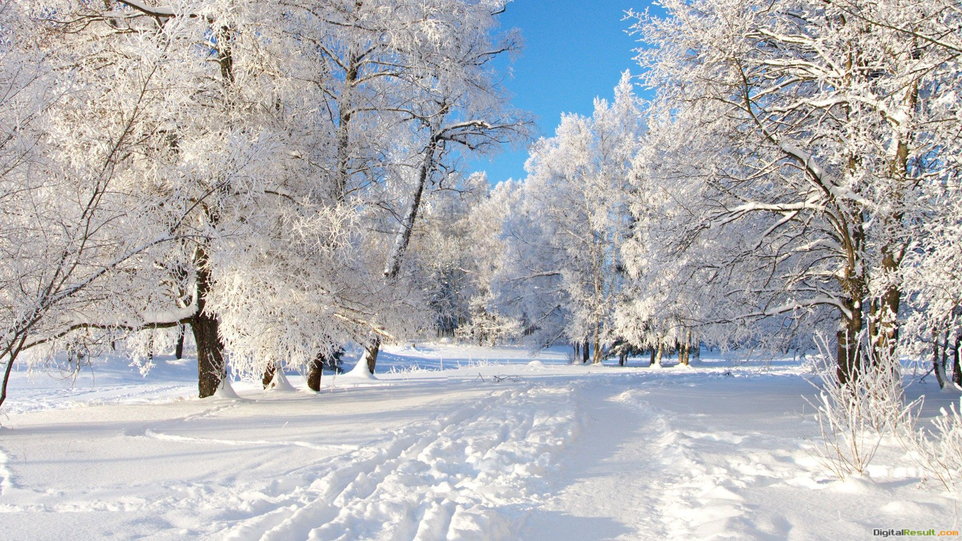 Winter Path HD WallpapersHD Wallpapers Backgrounds of Your Choice 1390