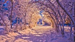 Winter Path HD WallpapersHD Wallpapers Backgrounds of Your Choice 1234