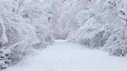 Winter Path WallpaperHD Wallpapers Backgrounds of Your Choice 1376