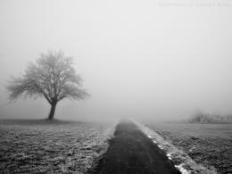 Pin Lonely Winter Wallpaper 1920x1200 on Pinterest 478