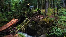 Mountain biking, Bike, Forest wallpaperForWallpaper com 1549