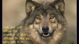Quotes About Native American WolfQuotesGram 1950