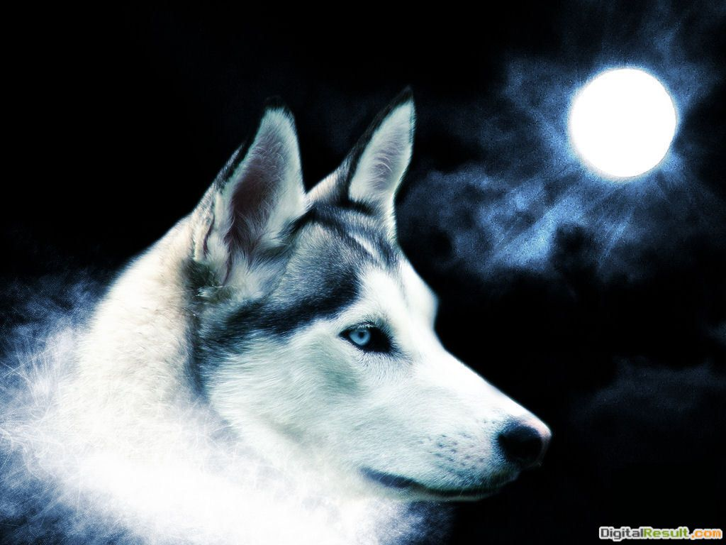 Spirit of the wolfTeddybear64 Wallpaper18327032Fanpop 432