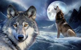 3D Wolf WallpapersAndroid Apps on Google Play 218
