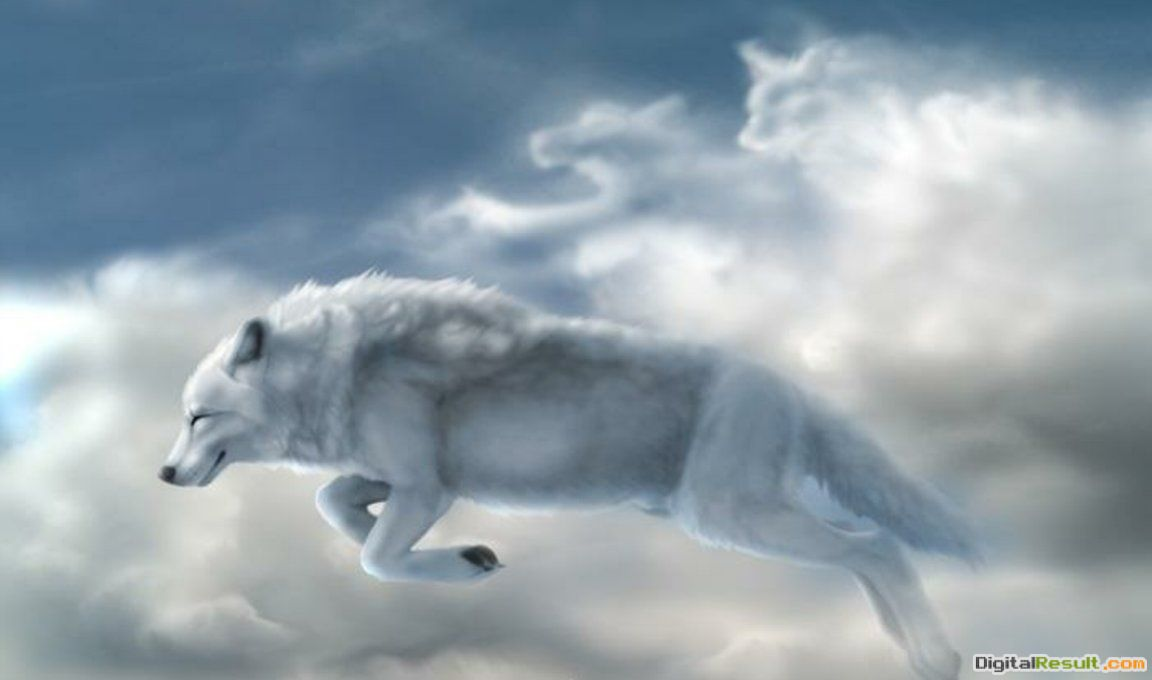 native american wolf wallpapers 1732
