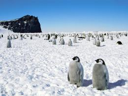 Wallpaper Emperor Penguins Couple Wallpaper Similar All Top Wallpapers 1845