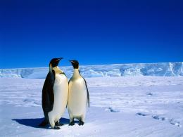 Wallpaper Emperor Penguins Couple Wallpaper Similar All Top Wallpapers 495
