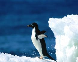25+ Cool looking Penguin pictures   A House of Fun 672