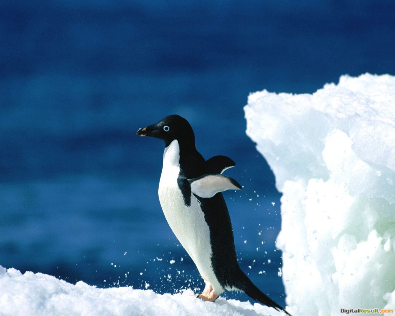 25+ Cool looking Penguin pictures | A House of Fun 672
