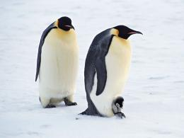 Ice Penguins Arctic 1920x1200 Wallpaper The Animals Penguins Hd 1126