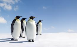 Penguins Wallpaper Ice 834