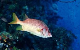 Pin Red Fish Wallpaper on Pinterest 168