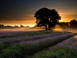 Sun Light Over The Purple Flowers Field Hd Wallpaper | Wallpaper List 1906