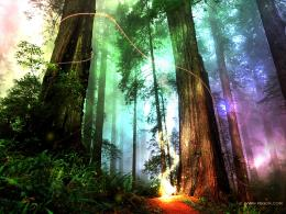 need some ideas magic forest terrain magical forest 1024x786 jpg 1288
