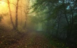 Magical Forest Path wallpapers | Magical Forest Path stock photos 1450