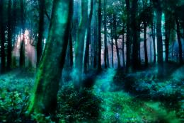 The Magic Forest by n0rth on DeviantArt 238