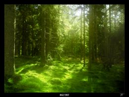 MAGIC FOREST by JTphoto on deviantART 1457
