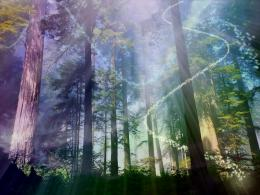 Magical Forest Wallpaper Magical forest… 1197