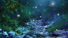 trees forest woods magic insects firefly night glow lights wallpaper 197