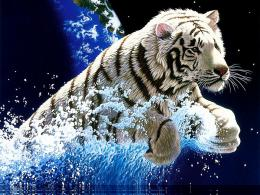 Cool Wallpapers Blog: Amazing White Tiger Wallpapers 1065