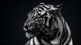 white tiger face 1772