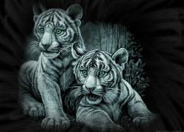 TIGER WALLPAPERS: Best White Tiger Wallpapers 1017