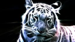 Neon white tiger wallpapers | HD Wallpaper 1135